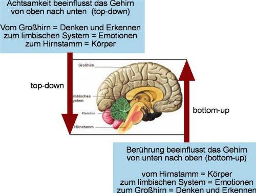 Yoni Academy Innsbruck - Forschungsbericht Achtsamkeit und Berührung 27-01-2011